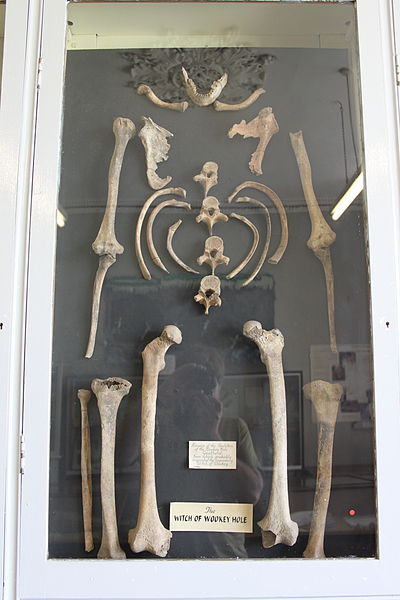 Skeleton_in_Wells_and_Mendip_Museum-Rodw